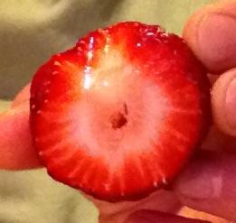Rosaceae: strawberrycut