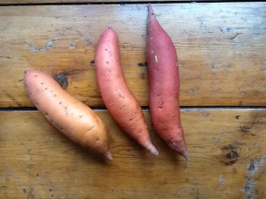 Convolvulaceae: sweet potatoes whole