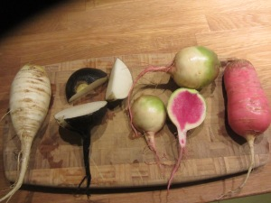 Radish varieties: white, black, watermelon and China rose