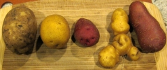 Solanaceae parade of spuds