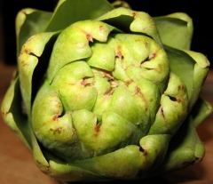 Asteraceae_FibonacciChoke