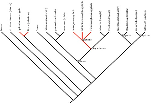 Evolutionary relationships among domesticated nightshades.  Phylogeny data from Knapp (2002)