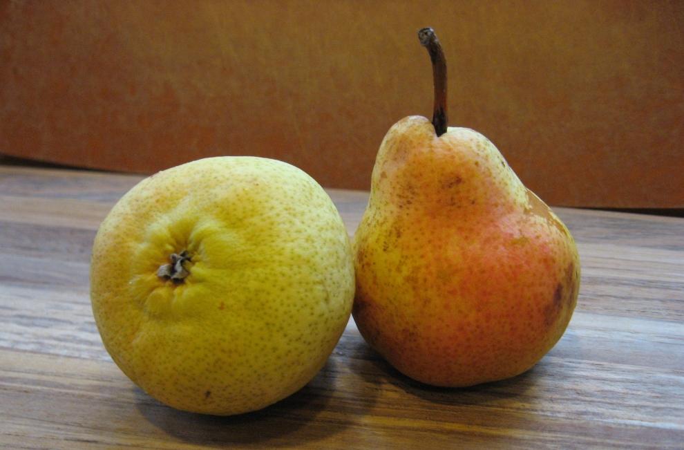 Rosaceae Bartlett pears