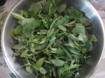Lemon vebena and lemon balm leaves, pre-syrup