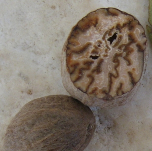 Nutmeg seed showing brown seed coat folded within the ruminate endosperm
