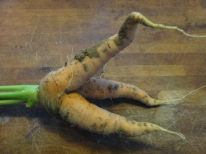 Possible side dish options for a pinene-limonene themed dinner: Carrots (Daucus carota) contain both pinene and limonene, as do fellow umbellifers celery root and fennel bulb