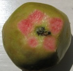 This pink pearl apple is pink all the way through.  That's one solution to browning.