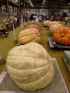 The 2014 Topsfield Fair giant pumpkin weigh-in, Topsfield, MA (photo by J. Savage)
