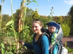 sorghum stalks can be almost as big as sugarcane