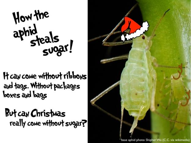 Figure 2. An aphid's proboscis pierces a plant's phloem to extract sugar water.
