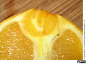 Rutaceae: navel orange
