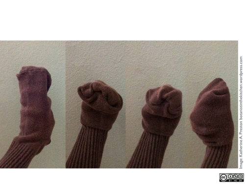 Sock puppet fig