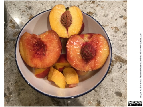 Yellow freestone peaches, one with a bit of anthocyanin in its flesh