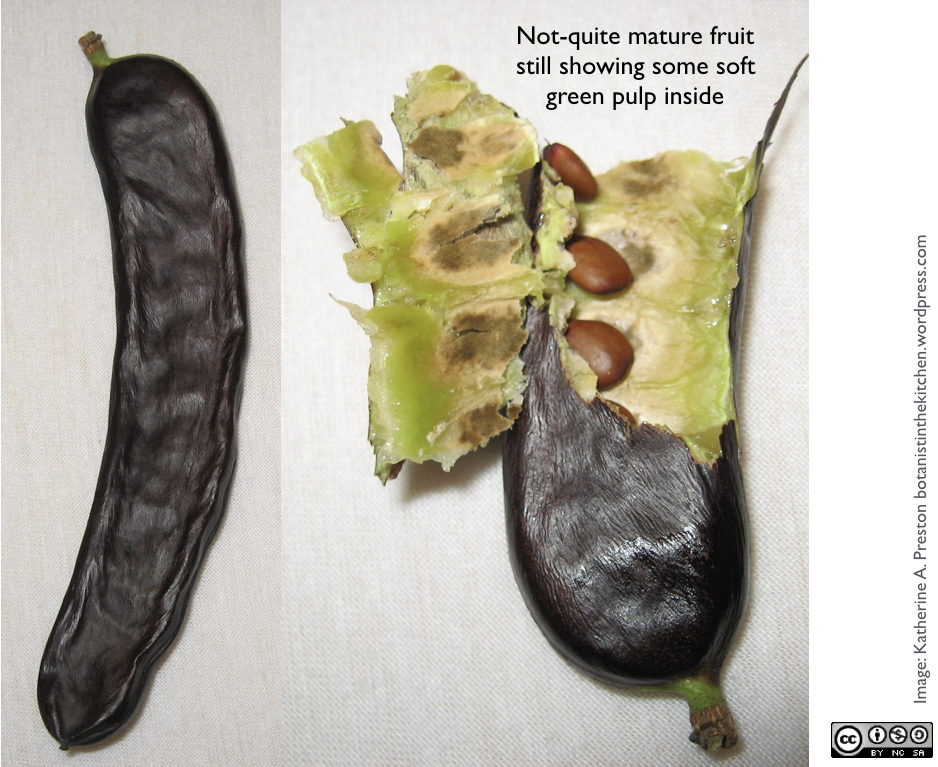 Pirates of the Carob Bean   The Botanist in the Kitchen