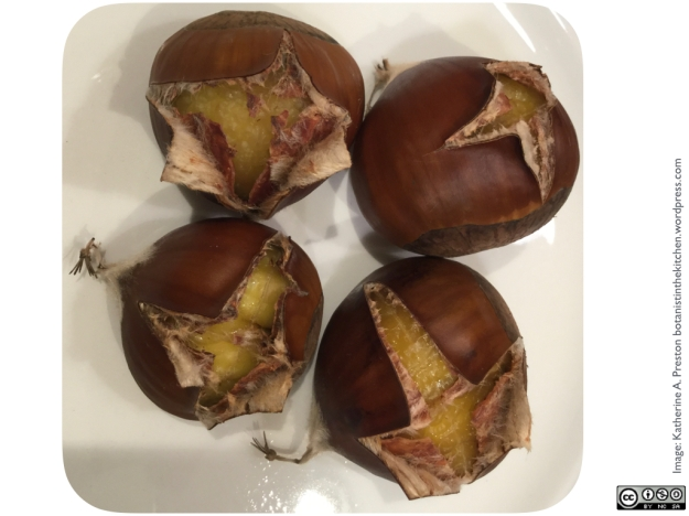 Fagaceae: Castanea sativa roasted chestnuts